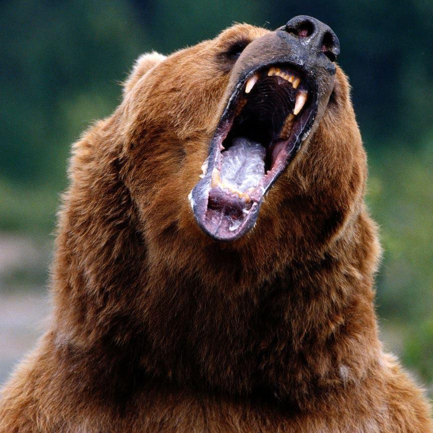 Letní Filmy Které Vás Budou Bavit: Můžeme Přežít útok Medvěda Grizzlyho?