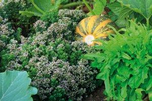 54 zahrada_309707780